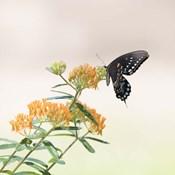 Butterfly Portrait II