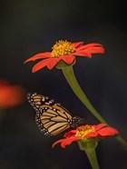 Butterfly Portrait X