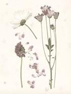 Pressed Blooms II