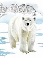 Arctic Animal II