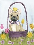 Puppy Easter III