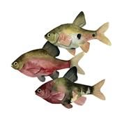 Rainbow Fish I