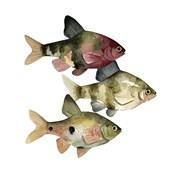 Rainbow Fish II