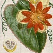 Cropped Turpin Tropicals I