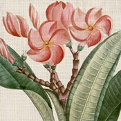 Cropped Turpin Tropicals VII