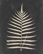 Linen Fern III