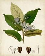 Verdant Foliage IV