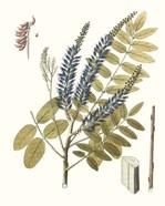 Lacy Leaves II