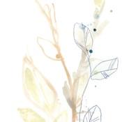 Botany Gesture VIII