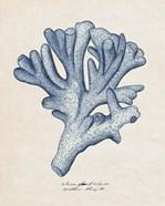 Sea Coral Study I