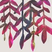 Fuchsia Vine I