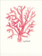 C is for Coral