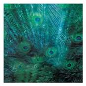 Peacock Galaxy Three