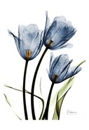 Indigo Infused Tulips