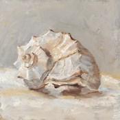 Impressionist Shell Study II