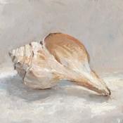 Impressionist Shell Study III