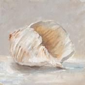 Impressionist Shell Study IV