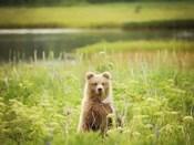 Bear Life VII
