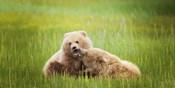 Bear Life VIII
