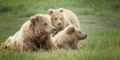 Bear Life IX