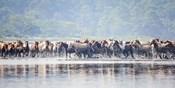 Water Horses II