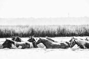 Water Horses III
