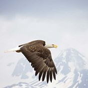 Majestic Eagle I