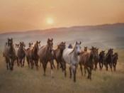 Sunkissed Horses II