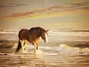Sunkissed Horses V