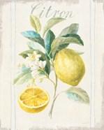 Floursack Lemon IV v2