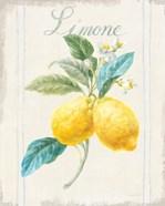 Floursack Lemon III v2