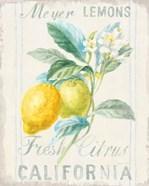 Floursack Lemon II