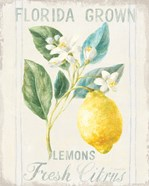 Floursack Lemon I