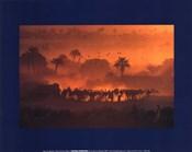 luc Manaud - Oasis de Fachi, Niger