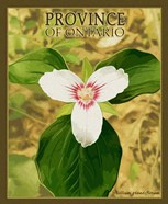 Province Ontario
