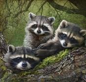 Raccoons As Art