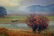 Horses And Lone Oak