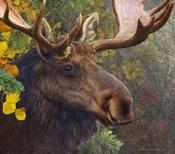 Moose Spruce