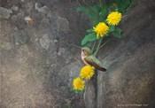 Dandelions Rock