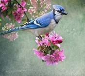 Bluejay Amid Blooms