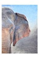 African Elephant B