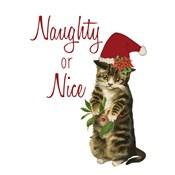 Cat Christmas 3