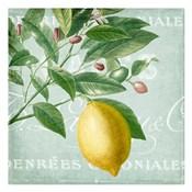 Lemon Drop 1