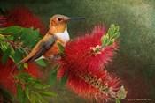 Red Bloom Hummingbird