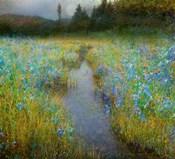 Kelly Marsh Iris