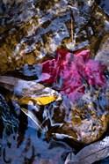 West Fork Creek Leaves