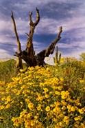 Desert Flowers With Tree Arizona