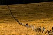Escudilla Mountain Meadow Fall 1