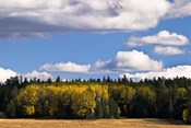 Escudilla Mountain Meadow Fall 2