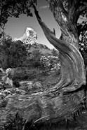 Sedona Juniper Tree National Forest